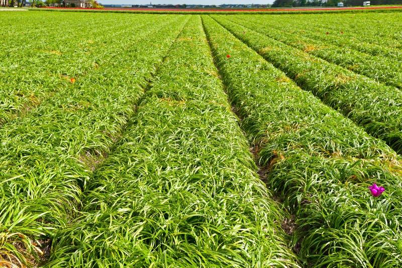 Download After Harvest stock image. Image of farmhouse, leaf, foliage - 26452247