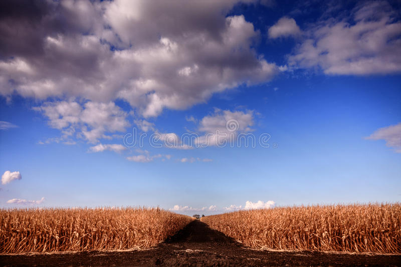 Download Harvest stock photo. Image of modified, road, harvest - 27448428