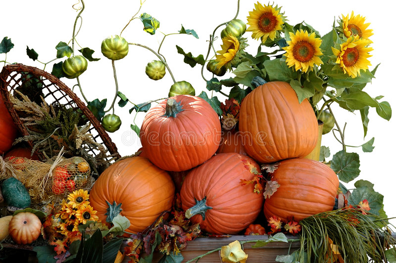 Harvest. Pumpkins, sunflowers and other vegetables for Halloween harvest royalty free stock image