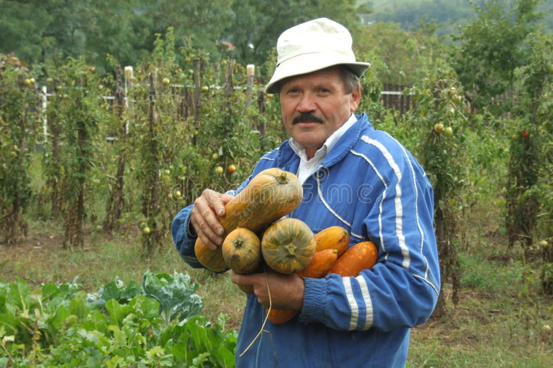 Harvest. Man in his garden at fall royalty free stock photo