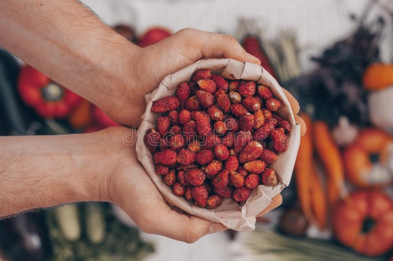 Harvest, Autumn. Fresh healthy fruits and vegetables. Healthy eating background. Red Strawberries in the hands of men closeup. Harvest, Autumn. Panoramic royalty free stock image
