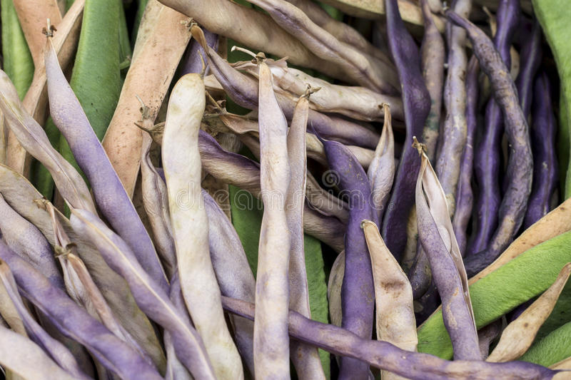 Harvest of beans in the basket closeup. Beans are a delicious and healthy product. Beans has a beautiful natural color and texture royalty free stock photography