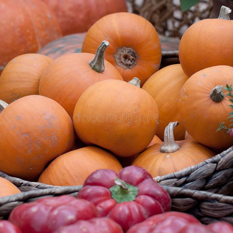 Ripe pumpkins in a basket. A harvest of beautiful mature pumpkins and peppe folded, laid in a basket stock photography