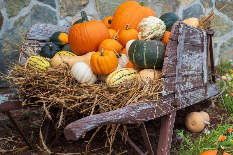 Harvest Bounty stock foto