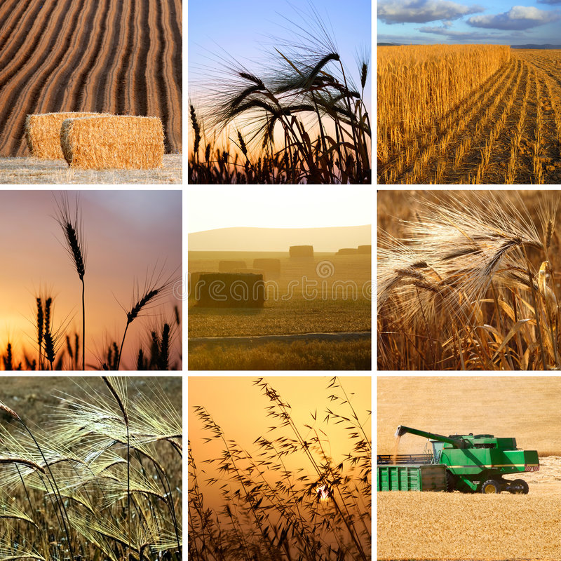 Harvest collection royalty free stock photo