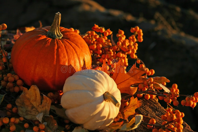 Harvest colors. Rich colors of a fall harvest at sunset royalty free stock image