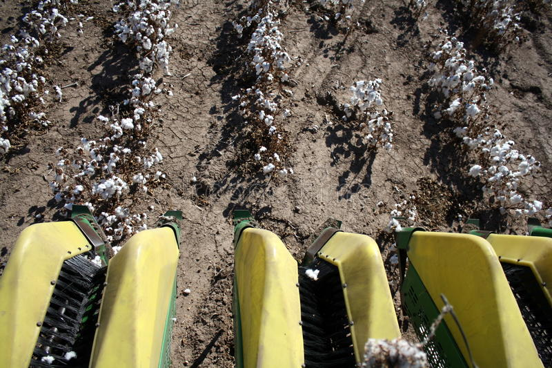 Download Harvest of Cotton stock photo. Image of texas, cotton - 22549214