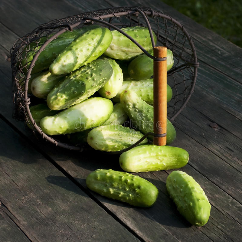 Harvest Cucumbers In A Basket Stock Photo
