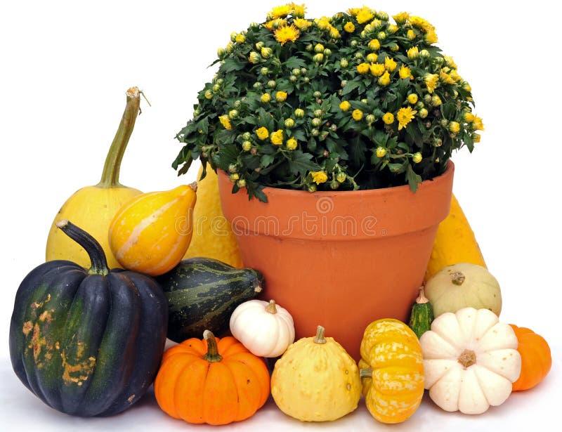 Harvest decoration stock image