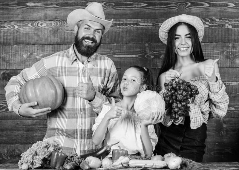 Harvest festival concept. Parents and daughter celebrate harvest holiday pumpkin vegetables fruits. Family farmers with royalty free stock photography