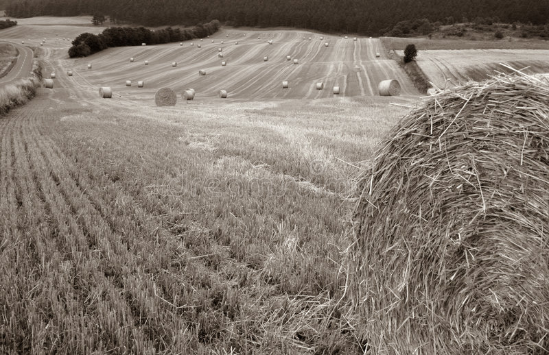 Download Harvest Field Bale Of Straw Stock Image - Image: 1003719