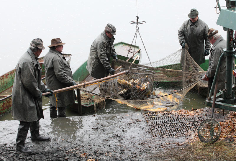 Harvest of fishpond. stock images