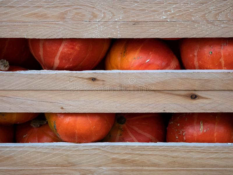 Heap of Red Hokkaido Pumpkins, Cucurbita maxima, In A Wooden Crate stock images