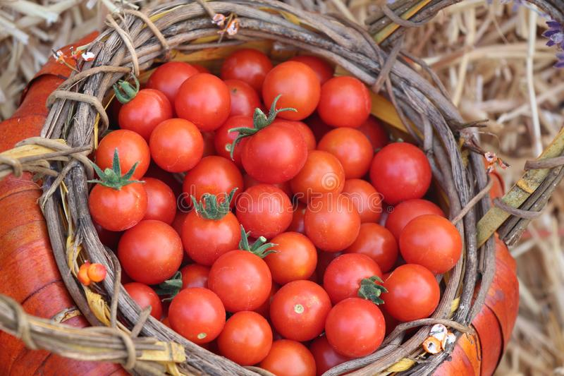 A Harvest of Heirloom Cherry Tomatoes royalty free stock photography