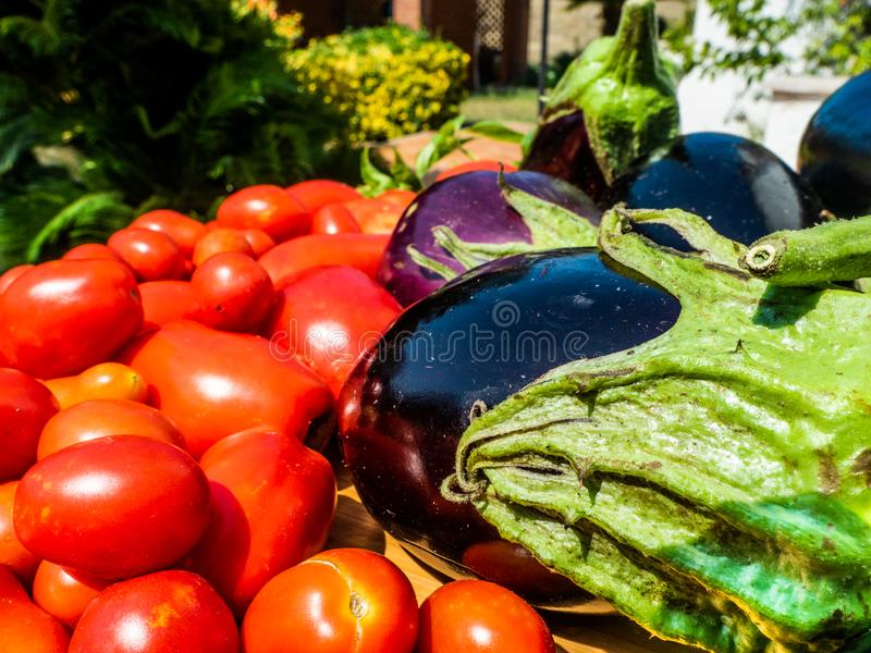 Harvest of Italian summer vegetables, grown in a small vegetable garden in a natural and healthy way, in the domestic garden royalty free stock photography