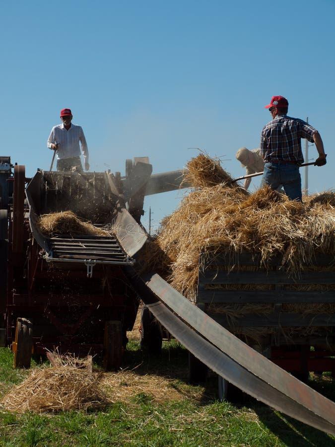 Harvest stock photo