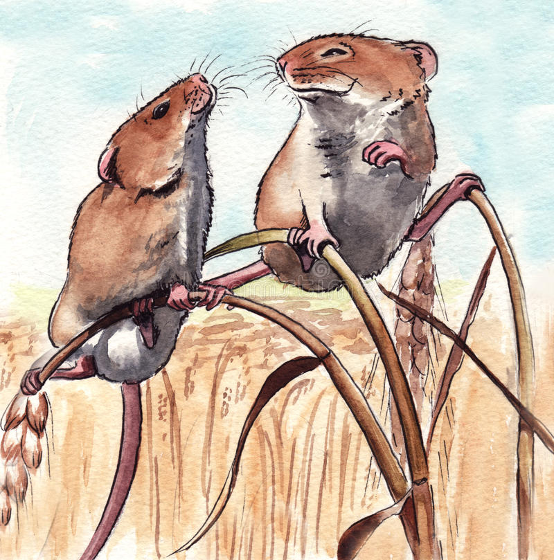 Harvest Mice. Watercolour illustration of a couple of field mice characters stock illustration