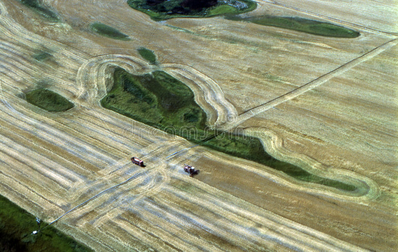 Harvest in Montana stock image