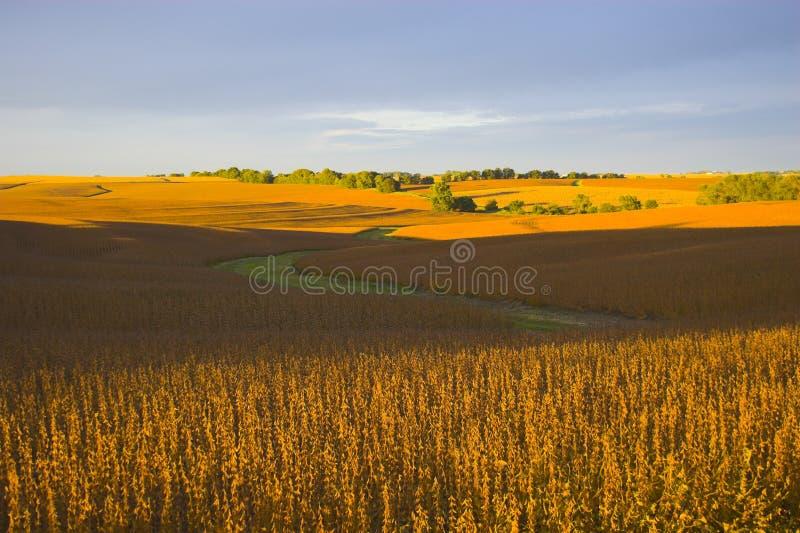 Harvest is near stock photo