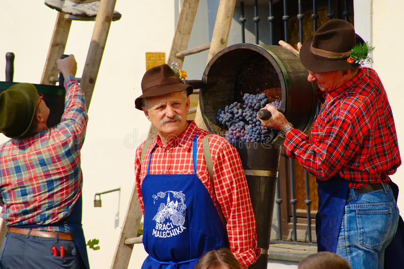 Harvest of the Old Vine on Lent in Maribor stock images