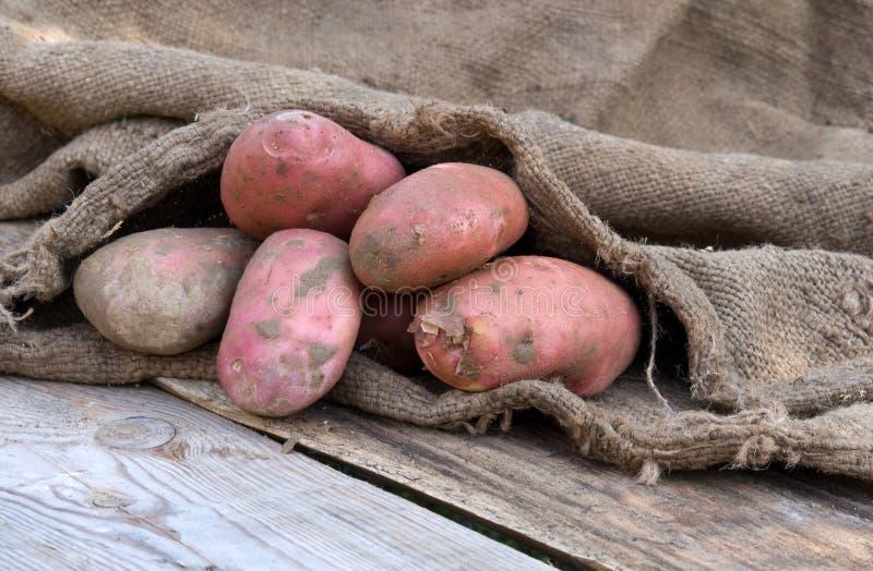 Harvest of potato stock images