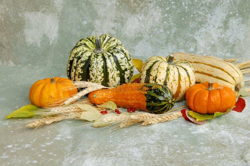 Harvest produce stock photos