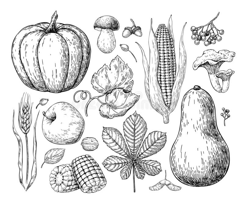 Harvest products. Hand drawn vintage vector illustration with pu stock illustration