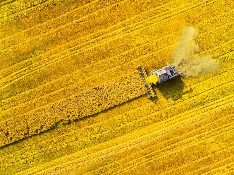 Harvest of rapeseed field. stock photos