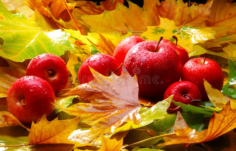 Harvest. Red apples. Harvest. Autumn still life with red apples and leaves stock photo