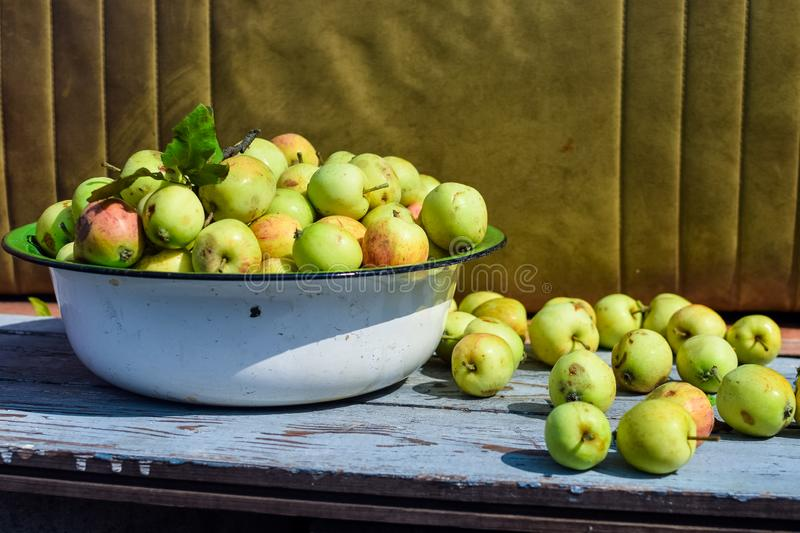 Harvest of ripe apples in an iron pelvis under the sun royalty free stock photos