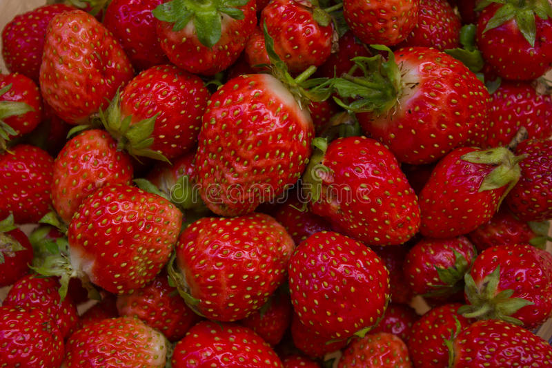 Harvest of ripe strawberries royalty free stock photography