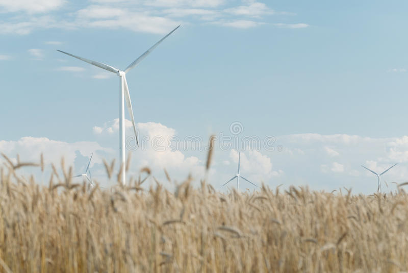 Harvest of rye and windmills royalty free stock photography