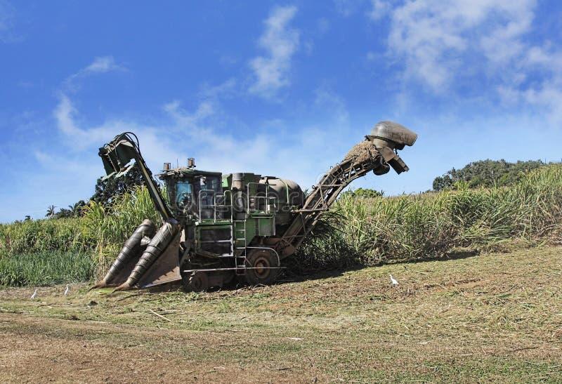 Harvest season on sugar farm. Sugar cane harvest season in Cairns Australia royalty free stock images