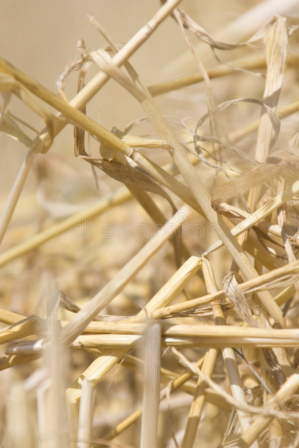 Harvest stubble royalty free stock photography
