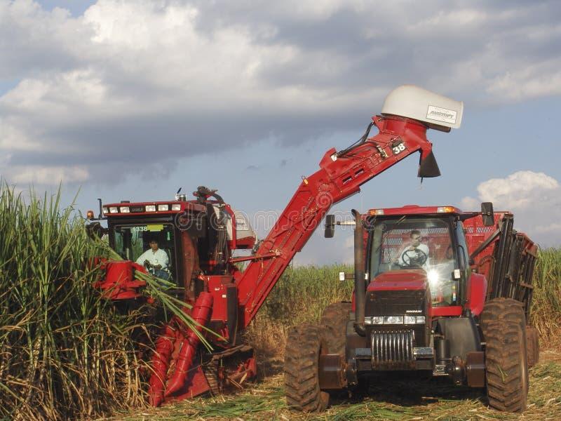 Harvest Sugar Cane. SAO PAULO, BRAZIL, APRIL 18, 2007. Sugar cane harvesting in Brazil stock photography