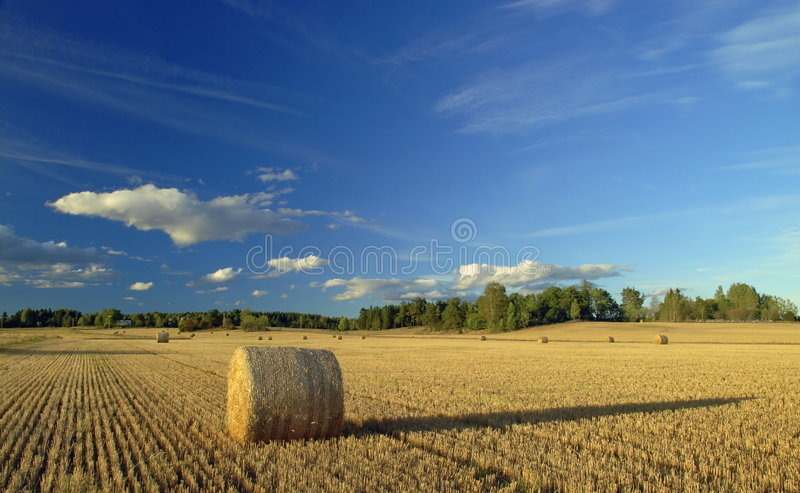 Download Harvest in Sweden stock photo. Image of cereal, environment - 3217414