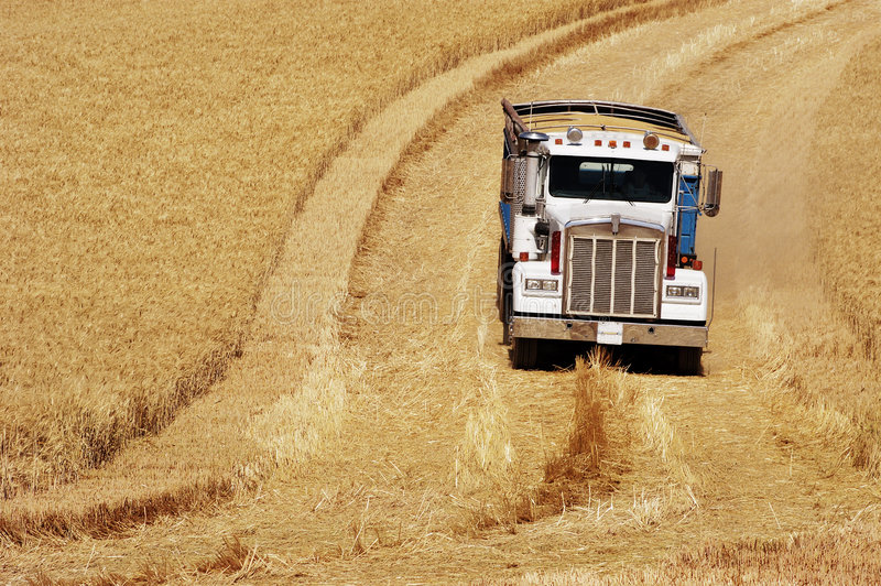 Harvest time 15 stock photos