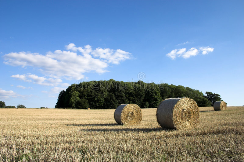 Harvest time. royalty free stock photo
