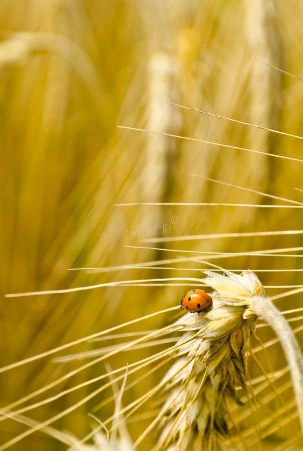 Download Harvest time stock image. Image of spring, health, agricultural - 26019391