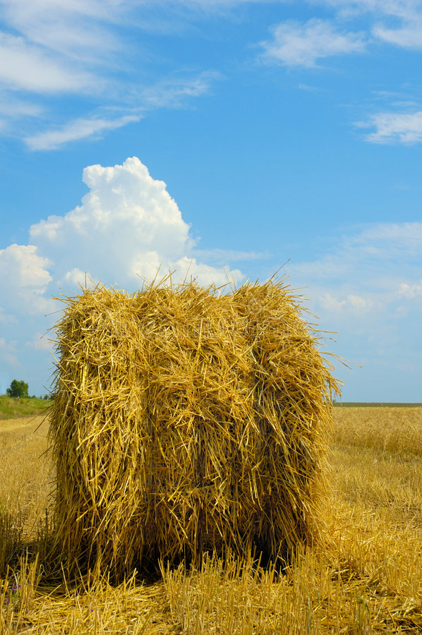 Free Harvest Time Royalty Free Stock Photo - 998245