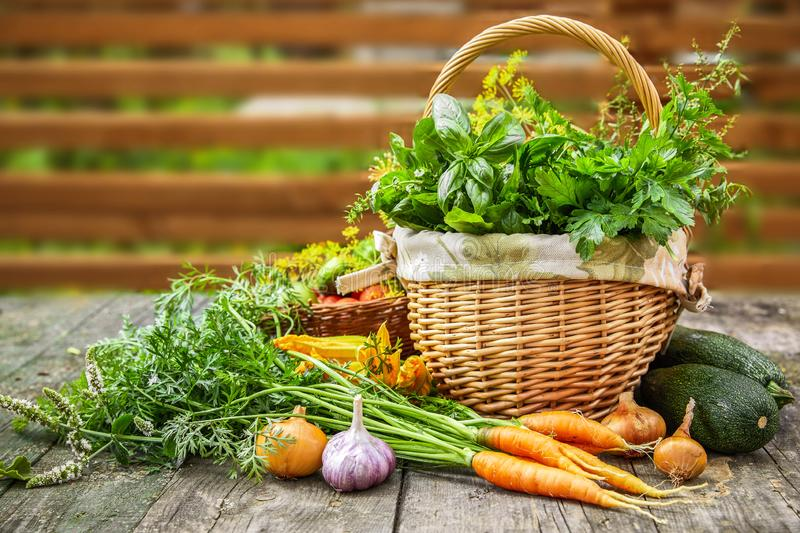 Harvest vegetables with herbs and spices royalty free stock photography