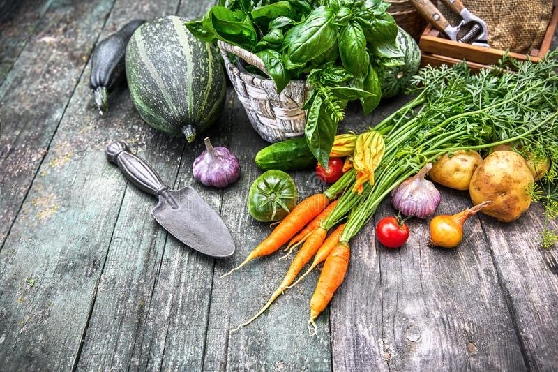 Harvest vegetables with herbs and spices royalty free stock photos