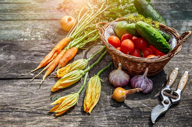 Harvest vegetables with herbs and spices stock photo