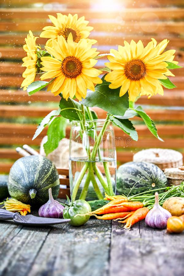 Harvest vegetables with sunflower herbs stock images