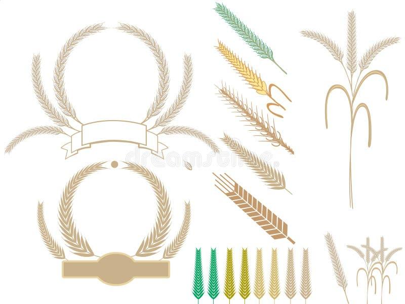 Harvest wheat ears. Wheat ears harvest thanksgiving set in different styles vector illustration