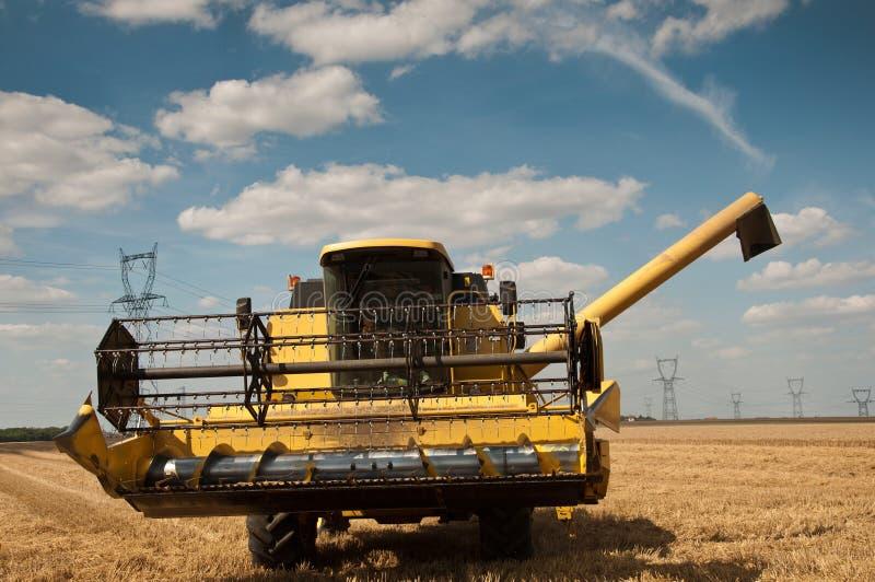 Harvest in wheat field. Landscape stock image
