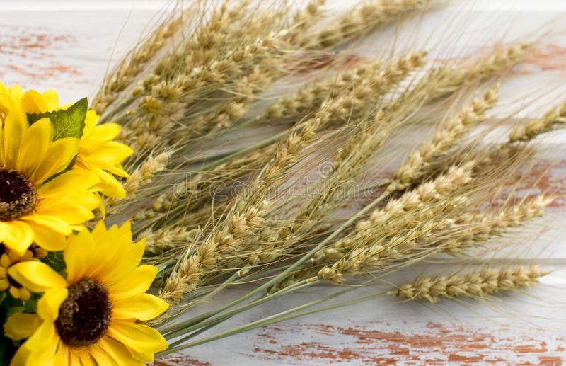 The harvest of wheat. stock photography