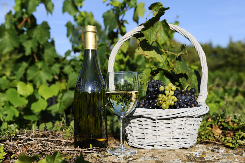 Harvest and wine stock photo