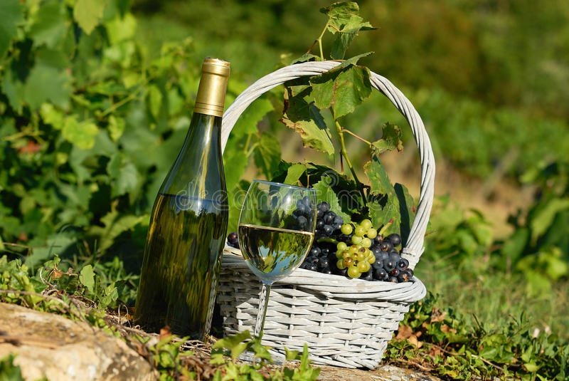 Harvest and wine royalty free stock photos