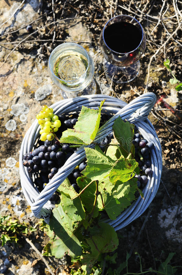 Harvest and wine royalty free stock photography